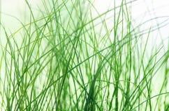 Blured конспектом предпосылка зеленой травы естественная текстура Стоковое Изображение RF