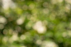 Blured Bokeh av sommarbegreppet för vit blomma och blad Arkivbilder