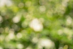 Blured Bokeh av sommarbegreppet för vit blomma och blad Arkivfoton