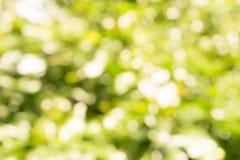 Blured Bokeh av sommarbegreppet för vit blomma och blad Royaltyfri Foto