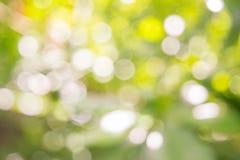 Blured Bokeh av sommarbegreppet för vit blomma och blad Royaltyfri Bild