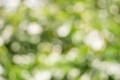 Blured Bokeh van wit bloem en blad de Zomerconcept Royalty-vrije Stock Foto's