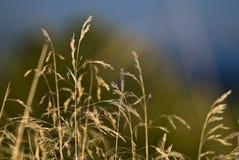 Blured-Gras Stockbilder