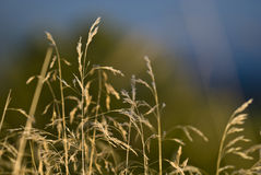 Blured grass. Close up of the grass, blured background Stock Images