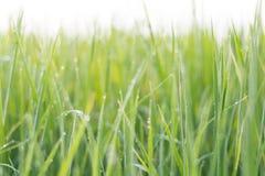 Blured Hintergrund des Grasgrüns Lizenzfreie Stockfotografie
