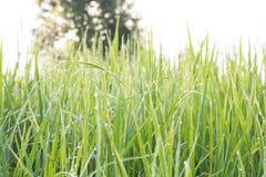 Blured Hintergrund des Grasgrüns Stockfoto