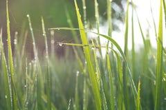 Blured Hintergrund des Grasgrüns Stockbild