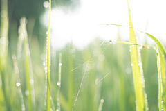 Blured Hintergrund des Grasgrüns Stockfotografie