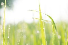 Blured Hintergrund des Grasgrüns Lizenzfreie Stockfotos