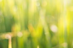Blured Hintergrund des Grasgrüns Lizenzfreies Stockbild