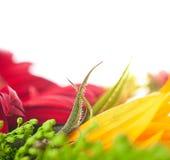 Blured jesień kwiaty, Fotografia Royalty Free
