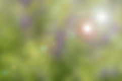 Blured nature background with green tone Stock Image