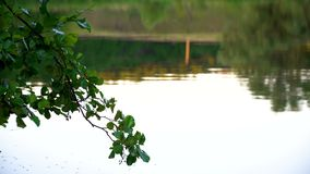 Pond at sunset. Blured reflection of forest in pond at sunset stock video footage