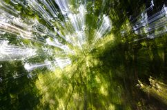 Blured sun rays. Abstract image of ray of sun trough trees Royalty Free Stock Images
