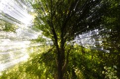 Blured sun rays. Abstract image of ray of sun trough trees Stock Photos