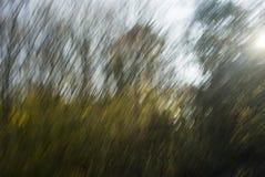 blurlövverk Arkivbild