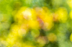 Blurred abstract background bokeh. Blurred abstract background in yellow and green tones with bokeh effect Royalty Free Stock Photography