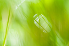Blurred abstract background with green grass Royalty Free Stock Images