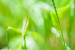 Blurred abstract background with green grass Royalty Free Stock Photo
