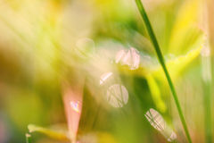 Blurred abstract background with green grass Royalty Free Stock Photos