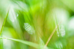 Blurred abstract background with green grass. And bokeh Royalty Free Stock Photography