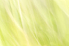 Blurred abstract background. Pastel green. Stock Photography