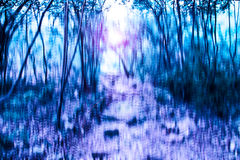 Blurred abstract background photo of forest with surreal motion blur effect Royalty Free Stock Images