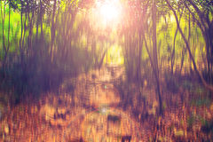 Blurred abstract background photo of forest with surreal motion blur effect Royalty Free Stock Photography
