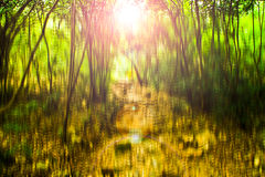 Blurred abstract background photo of forest with surreal motion blur effect Royalty Free Stock Photos