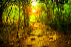 Blurred abstract background photo of forest with surreal motion blur effect Stock Photography