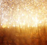 Blurred abstract photo of light burst among trees. Royalty Free Stock Photography