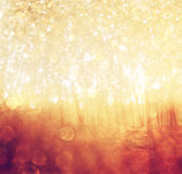 Blurred abstract photo of light burst among trees. And glitter bokeh lights. filtered image and texture Stock Image