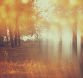 Blurred abstract photo of light burst among trees Royalty Free Stock Photos
