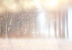 Blurred abstract photo of light burst among trees. Royalty Free Stock Photos