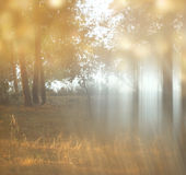 Blurred abstract photo of light burst among trees Stock Images