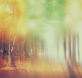 Blurred abstract photo of light burst among trees. Blurred abstract photo of light burst among trees and glitter bokeh lights. filtered image and texture vector illustration