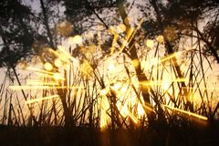 blurred abstract photo of light burst among trees and glitter bokeh lights. filtered image and textured Stock Image