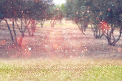 Blurred abstract photo of light burst among trees and glitter bokeh lights. Royalty Free Stock Images