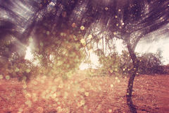 Blurred abstract photo of light burst among trees and glitter bokeh lights Royalty Free Stock Photos