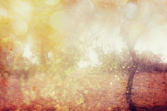 Blurred abstract photo of light burst among trees and glitter bokeh lights. Stock Photo