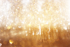 Blurred abstract photo of light burst among trees and glitter bokeh lights. Royalty Free Stock Photography