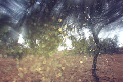 Blurred abstract photo of light burst among trees and glitter bokeh lights. Stock Photos