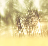 Blurred abstract photo of light burst among trees. Stock Photos