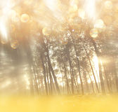 Blurred abstract photo of light burst among trees. And glitter bokeh lights. filtered image and textured royalty free illustration