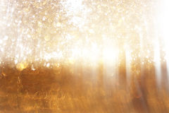Blurred abstract photo of light burst among trees. And glitter bokeh lights. filtered image and textured vector illustration