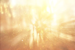 Blurred abstract photo of light burst among trees and glitter bokeh lights.