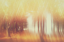 Blurred abstract photo of light burst among trees and glitter bokeh lights. filtered image and textured. Blurred abstract photo of light burst among trees and stock photo