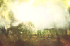 Blurred abstract photo of light burst among trees and glitter bokeh lights. filtered image and textured. Stock Photo