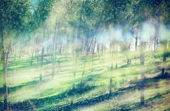 Blurred abstract photo of light burst among trees and glitter bokeh lights. filtered image and textured. Royalty Free Stock Photo
