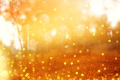 Blurred abstract photo of light burst among trees and glitter go Stock Image